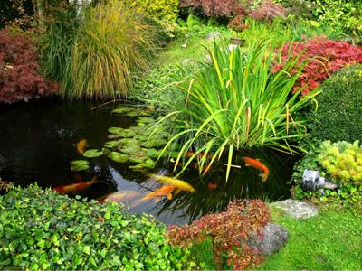 We build landscaped ponds and waterfalls.