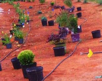 Photo Gallery For Wind Chime Nursery Shrub Amp Tree Grower